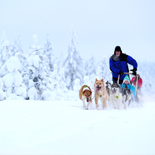diepe winter Lapland